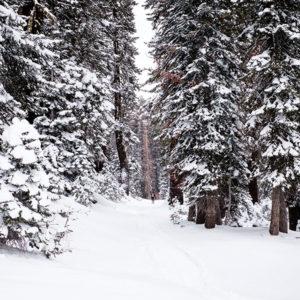 bosc-nevat-hivern-alta-ruta